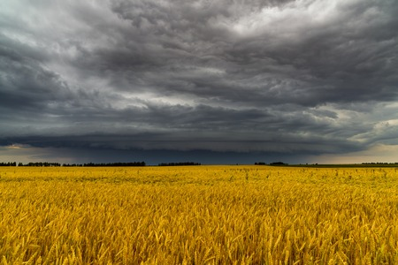 Round storm cloud over a wheat field. Russia Stock Photo