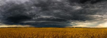 Nuage d'orage rond sur un champ de blé en Russie. Panorama