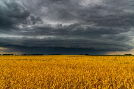 Round storm cloud over a wheat field. Russia Фото со стока