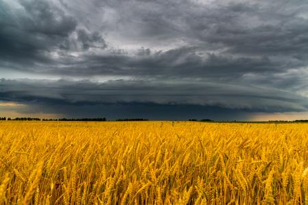 Round storm cloud over a wheat field. Russia Archivio Fotografico