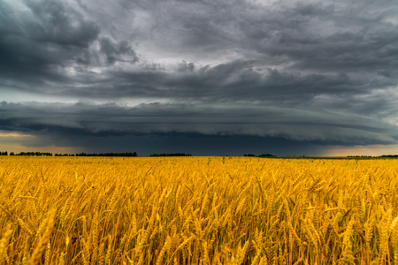 Round storm cloud over a wheat field. Russia Standard-Bild