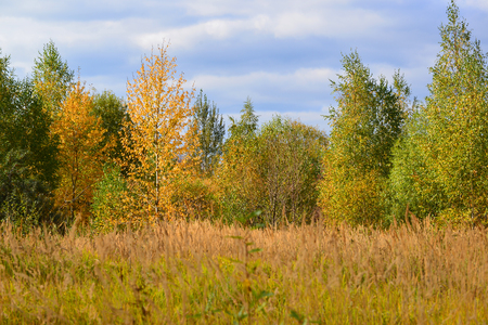 Beautiful autumn landscape with a deciduous trees and grass