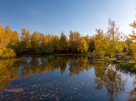 Russian autumn landscape with birches, pond and reflection