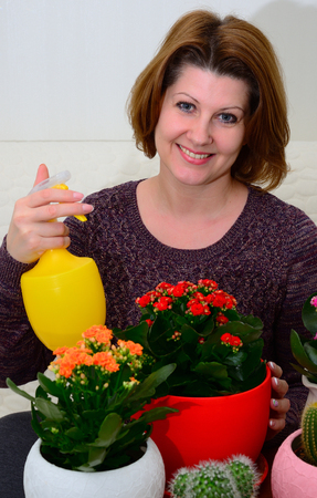 The Woman watering potted flowers Kalanchoe indoors Фото со стока - 113693526