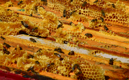 Bees are sitting on the comb in the hive