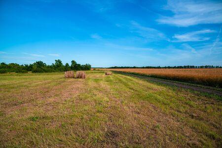 ländliche Landschaft mit Strohrolle auf reifem Weizenfeld in Russland