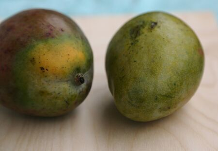 Fresh mango fruit in green peel before cooking on the table