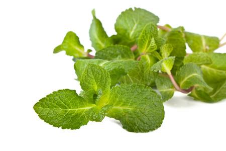 Frische grüne Minze auf weißem Hintergrund Standard-Bild - 31593427