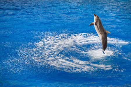 bottlenose dolphin (Tursiops truncatus) jumping out of water photo