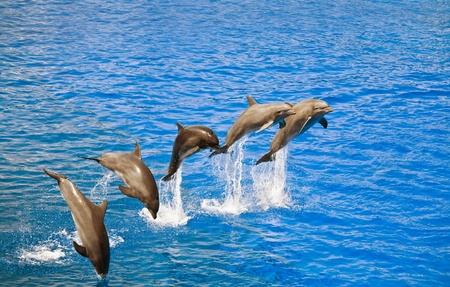FIve happy dolphins jumping out of the water Stock Photo