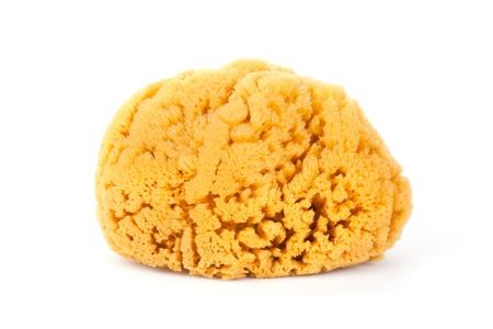 Natural bath sponge isolated on white background.