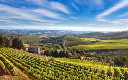 Hills of the Tuscany with vineyards, Italy   photo