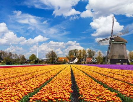 windmills: Windmill with tulip field in Holland Stock Photo