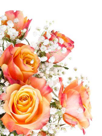 rosas naranjas: Las rosas anaranjadas con flores blancas sobre un fondo blanco Foto de archivo