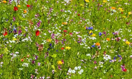 Background of flowers field