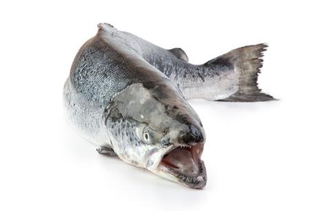 Whole atlantic salmon on the white background