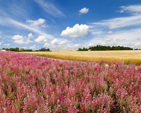 provencal: Provencal landscape with fields, France