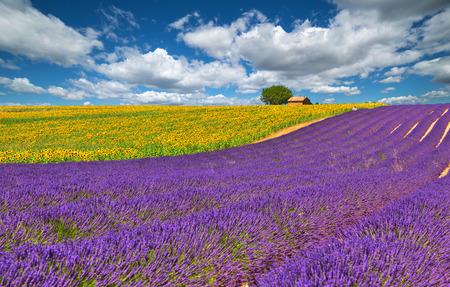 Lavendel en zonnebloem veld in Valensole. Frankrijk