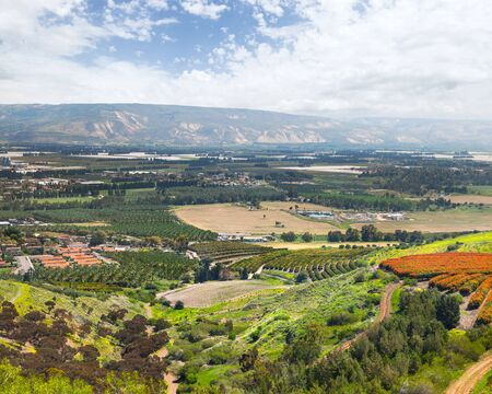 israel agriculture: The cultivation of dates, herbs and spices in the Jordan valley. Israel Stock Photo