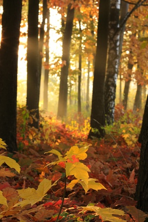 Divine light in the autumn trees photo