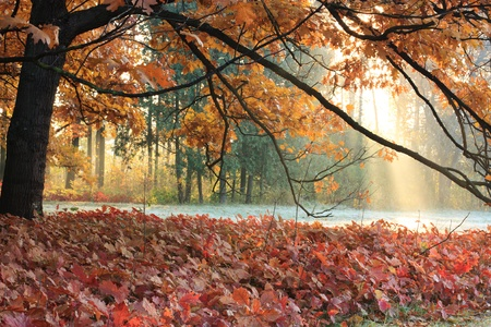 The sun's rays in the autumn meadow Stock Photo - 11237584