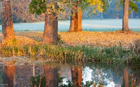 bullrush: Early morning on the shore of the autumn lake