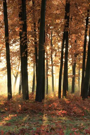 Bright early sunshine in the autumn forest Stock Photo - 13034212