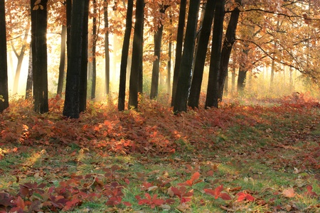 Warm morning light in the autumn trees photo