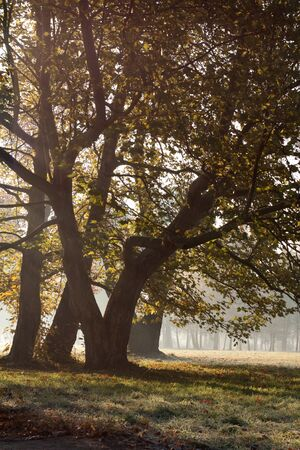 Mysterious morning light and fabulous trees photo