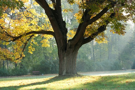 Highlights of the morning and an old oak tree photo