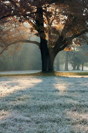 Misty frosty morning in the park