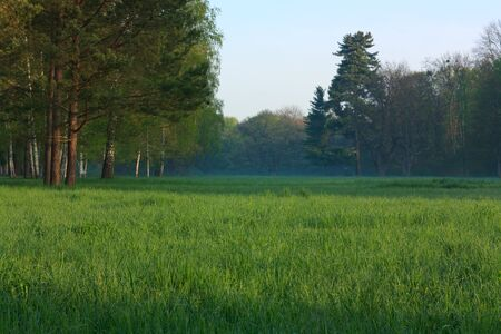 The tall trees on a large green lawn. Landscape photo