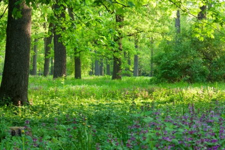 Divine morning, beautiful light, lush greenery Stock Photo - 13636812