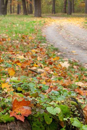 earth road: Terra strada nel bosco in autunno. Il vecchio ceppo d'albero in primo piano