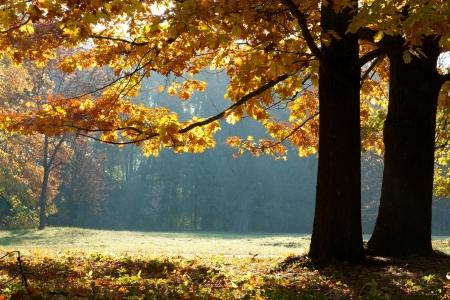 Autumn in the Oak Grove.  The colorful autumn landscape