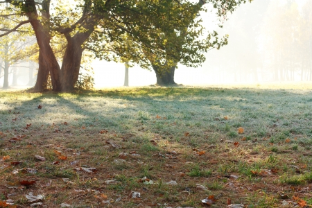 Beautiful misty morning. Autumn in the Park photo