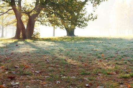 Beautiful misty morning. Autumn in the Park photo
