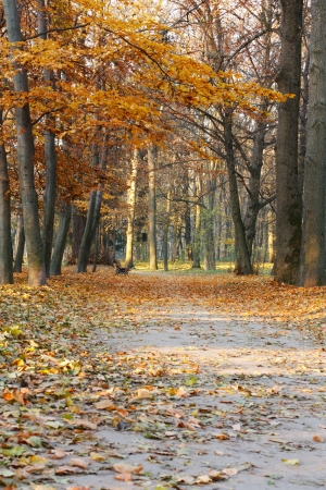 Autumn Landscape with bench and fallen leaves on the footpath Stock Photo - 14115442