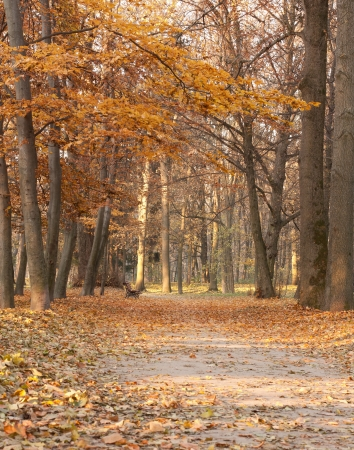 Autumn landscape in shades of brown. Bench and fallen leaves Stock Photo - 14254096