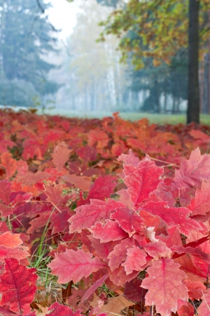 Autumn meadow and red leaves photo