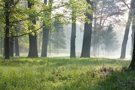 prosperous: Spring in the old park. Misty Morning nature