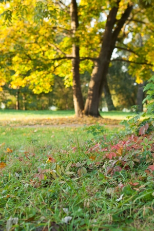 Nature in the early fall - the first steps of autumn, landscape photo