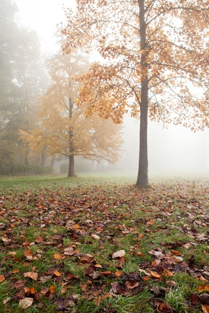 Autumn Landscape with two trees in the mist, nature photo