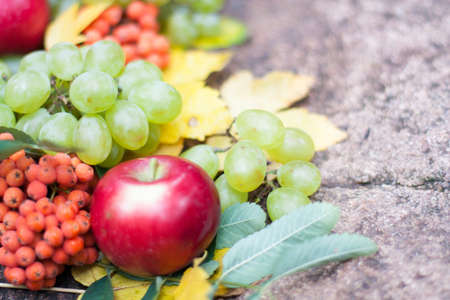 Fruit on a stone. Autumn background. Close up photo
