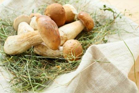 pile of porcini mushrooms on hay, food 스톡 콘텐츠