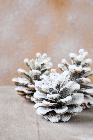 pine cones covered with artificial snow, xmas photo