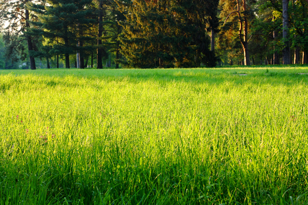 spring green grass in a clearing in the woods, food closeup