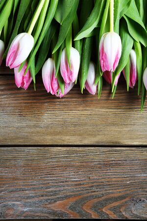 spring pink tulips, flowers photo