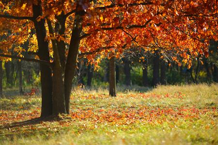 paisaje de otoño, la naturaleza