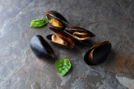 mussels: raw black mussels Stock Photo